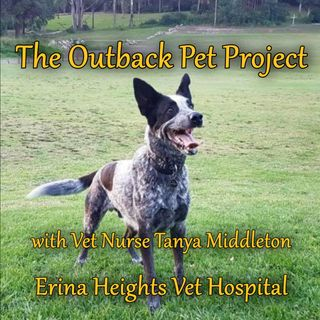 Outback Pet Project - Tanya Middleton