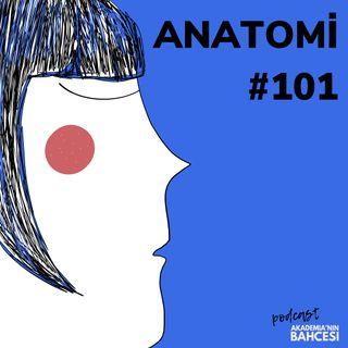 Anatomi 101/ Bölüm 3