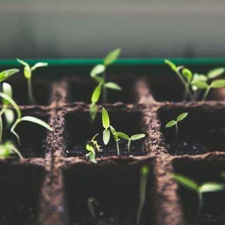 Indoor Seeding Tips & Tricks with Tara Bernardin