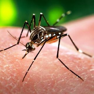 What You Need To Know About the Zika Virus