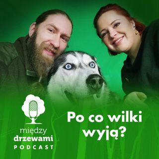 #39 Po co wilki wyją?