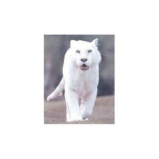 White Spirit Animals - Prophets of Change with Zohara Hieronimus