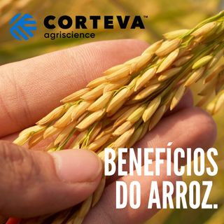 Podcast Corteva Agriscience - Benefícios do Arroz