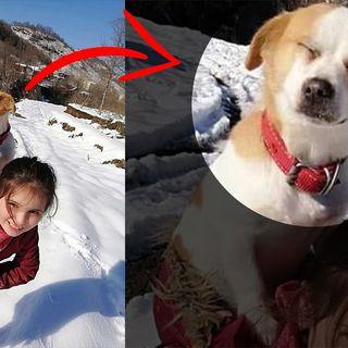 Al villaggio non ci sono veterinari lei porta il suo cane malato in spalla per 1,5 KM per salvarlo