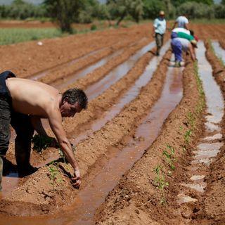 Tipos de propiedad agraria