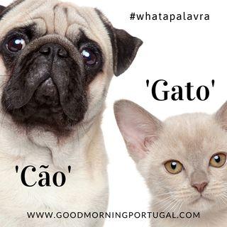 Good Morning Portugal! What a Palavra? 'Cao' e 'Gato'