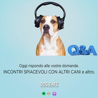 #062 - Q&a incontri spiacevoli con altri cani e altro