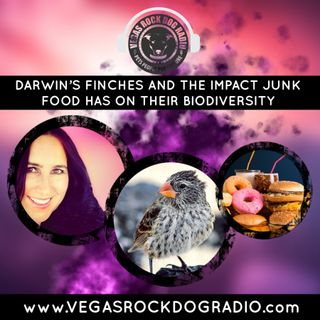 Darwin's Finches And The Impact Junk Food Has On Their Biodiversity