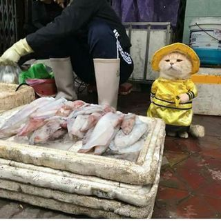 #rast Il gatto pescivendolo