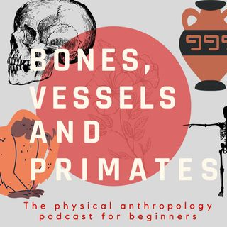 Bones, Vessels and Primates: 1° Primates our mates