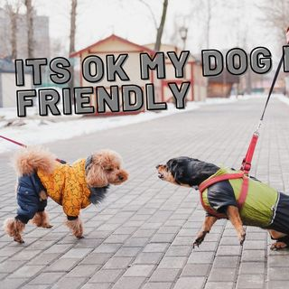Its Ok my dog is Friendly ep 41 5-18-2021