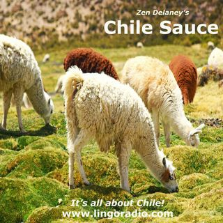 Chile Sauce by Zen Delaney on Lingo Radio Monday June 8 2020