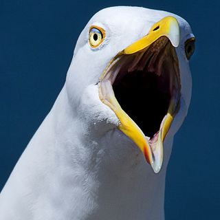 Seagull Steals Man's Money At Manchester By The Sea Beach
