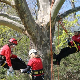 Animal Rescue League Staffers Climb Trees To Practice Cat Rescues