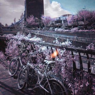 La magia dell'infrarosso a Seul