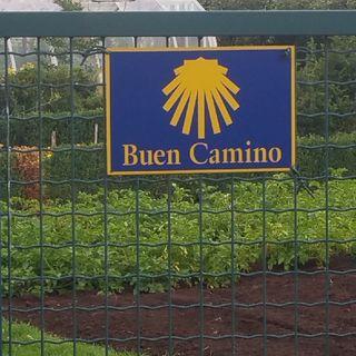 Deel 2 Buen Camino