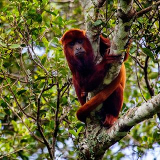 La liberación de fauna silvestre más grande que se haya hecho en Colombia