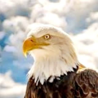 🦅🥀 The EAGLE Spirit 🥀🦅 All About The EAGLE Spirit Animal VIDEO 🥀🦅❤ Episode 42 - All Things Spiritual by Healing Elements