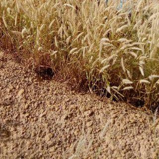 Bulletin agrométéo 2020-07-25 at 13.06.21 pour les agriculteurs