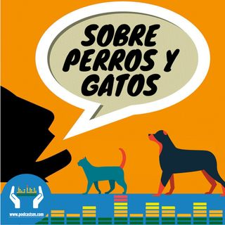 199 - Sobre conciencia de perros y virtual de gatos #Interpodcast2019