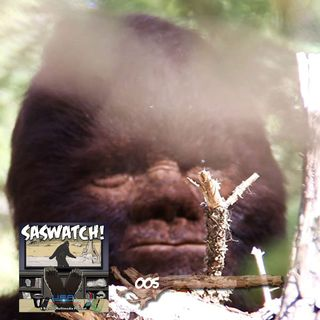 SW: 005: Discovering Bigfoot