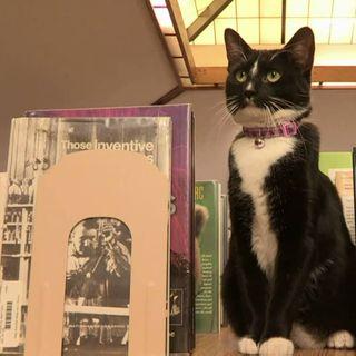16. Un gatto che lavora in biblioteca
