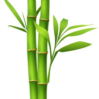 Syncopated Chaplain Podcast 4 Growth and the Bamboo