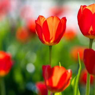 April showers bring May flowers...What death teaches us about life.