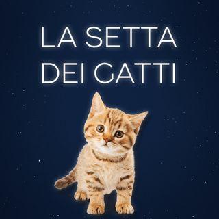 La setta dei gatti