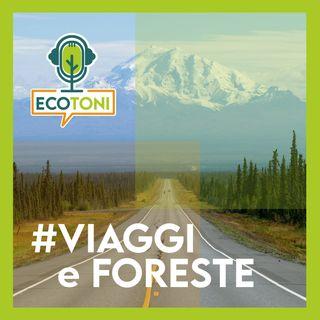Viaggi & foreste