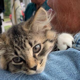 Malden Police Seek Info On Kitten Left In Taped-Up Box