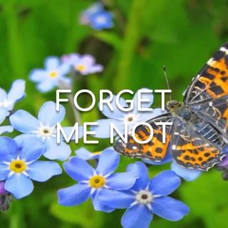Forget Me Not - Morning Manna #2745