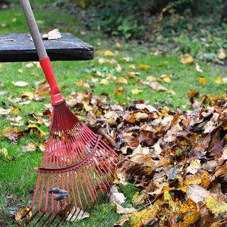 Ep22 8-Fall  Task & Fall Garden Bootcamp Challenge