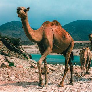 Pozdrowienia ze świata: #Oman