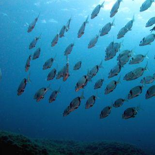 De nuestros mares para los paladares