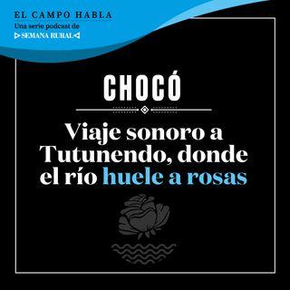 CHOCÓ. Viaje sonoro a Tutunendo, donde el río huele a rosas