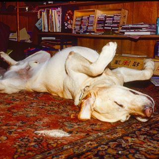 Episode 3 - A Doggie Exorcism