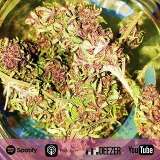 Capítulo 26: Beneficios de cultivar tu propia Marihuana