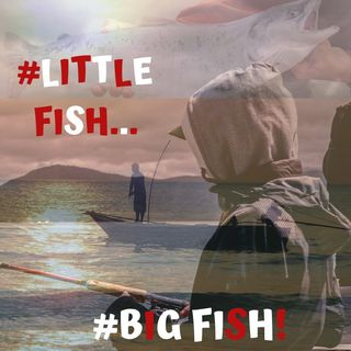 #LITTLE FISH - #BIG FISH!