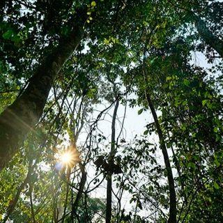 Smartphone e droni: così le comunità indigene combattono la deforestazione