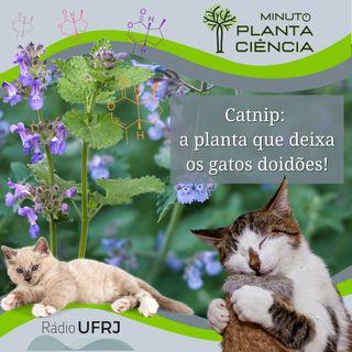 Minuto PlantaCiência - Ep. 22 - Catnip: a planta que deixa os gatos doidões! (Rádio UFRJ)