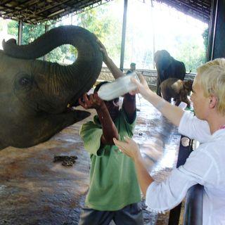 Odc. 1 Sri Lanka -największy zwierzak świata - słoń!