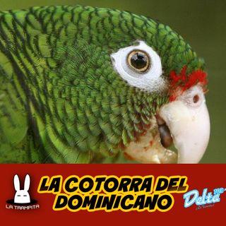 EP33. La Cotorra del Dominicano - Jose Matos