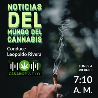 Noticias del mundo del Cannabis