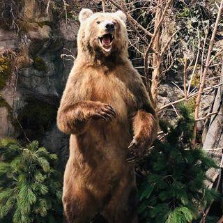 I due viandanti e l'orso