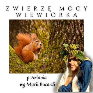 Zwierzę Mocy - Wiewiórka - Magia bogactwa obfitości gromadzenie Maria Bucardi