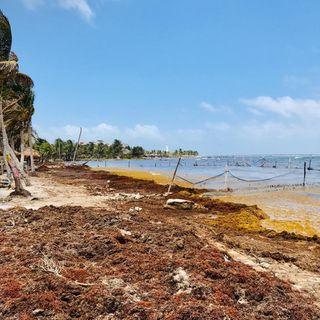 Continúan trabajos contra sargazo en Quintana Roo