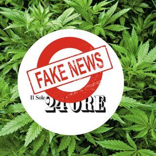Basta disinformazione sulla Cannabis!