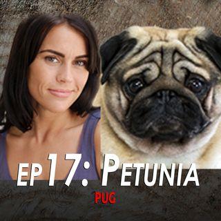 17 - Petunia the Pug