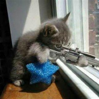 The Kitten Kong Radio Show 776: Under The Gun.